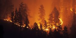 Wildfires Can Alter Arctic Watersheds for 50 Years