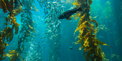 How Seaweed Is Taking Scientists on a Trip 'through Time'