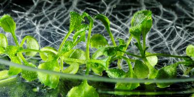 Research: Nanoplastics Are Accumulating in Land Plant Tissues