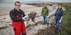 Wet Wipes and Sanitary Products Found to Be Microplastic Pollutants