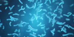 New Technique Permits Analysis of a Single Bacteria Cell