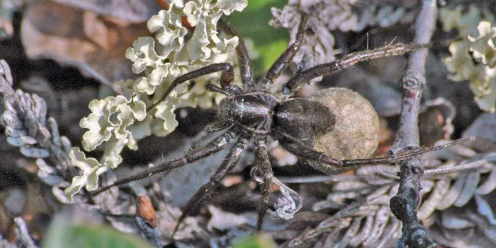 A Warmer Arctic Leads to Spider Baby Boom, Study Finds