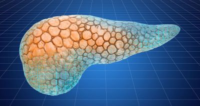 Pancreatic Tissue Preservation Tech Reveals Beta Cell Regeneration