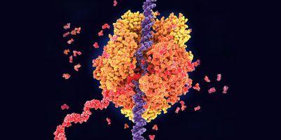 "Molecular ""Tails"" Are Secret Ingredient for Gene Activation"