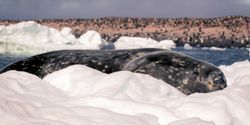 We've Impacted Antarctica More Widely Than Previously Thought