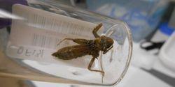 Dragonflies Reveal Mercury Pollution Levels across US National Parks