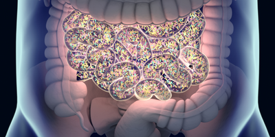 Gut Bacteria in People with Huntington's Disease May Be Potential Drug Target