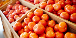2045 Climate May Be Too Hot for Some of America's Favorite Produce Crops