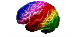 Researchers Reveal a Color Palette in Brain