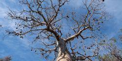 Genetics of the Tree of Life
