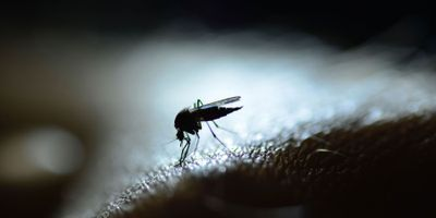 New Malaria Transmission Patterns Emerge in Africa