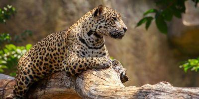 Using the Past to Maintain Future Biodiversity