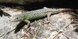 Climate Crisis Ages Fish, Amphibians, and Reptiles