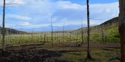 Tree Rings Show Scale of Arctic Pollution Is Worse Than We Thought