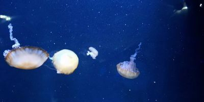 How Jellyfish Could Provide a More Sustainable Takeout Option