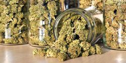 Cannabis Data Lacking, but Machine Learning Could Help