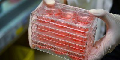 24/7 Remote Cell Culture Incubation Monitoring
