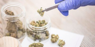 Medical Cannabis Research: Past, Present, and Future