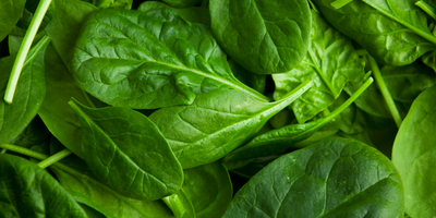 Chemistry Experiments Show Spinach's Potential to Power Fuel Cells