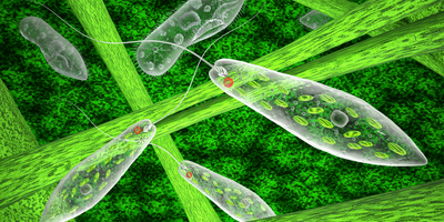 New Protocol Could Help Turn Microalgae into Health Foods