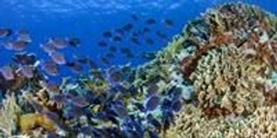 Fish Diversity Linked to Caribbean Coral Reef Health