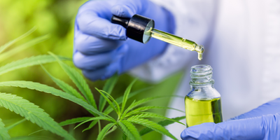Researchers Show How CBD Helps Reduce Lung Damage from COVID