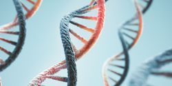 Coronavirus Mutations Show Early Safety Measures and Restrictions Limited Viral Spread