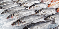 A Smart Solution to Detect Seafood Spoilage