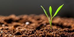 Report Reviews Debate on Genome Editing for Crop Improvement