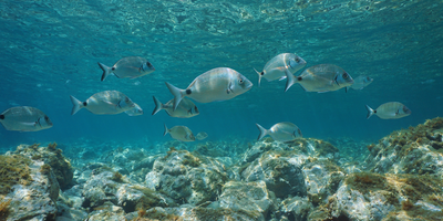 Researchers Outline How Marine Reserves Can Benefit Fisheries