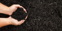 Researchers Find Contents of Mulch Bags Do Not Match Claims
