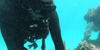 Using Satellites and Field Studies to Improve Coral Reef Restoration