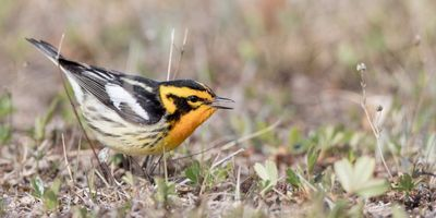 Study: Clean Air Act Saved 1.5 Billion Birds