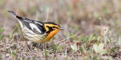 Study: Clean Air Act Saved 1.5 Billion Birds