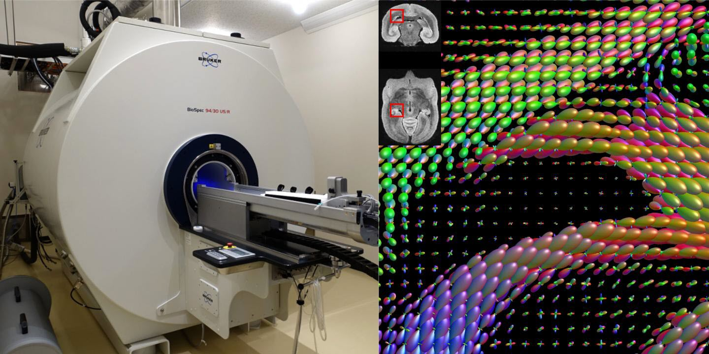 Machine Intelligence Accelerates Research into Mapping Brains