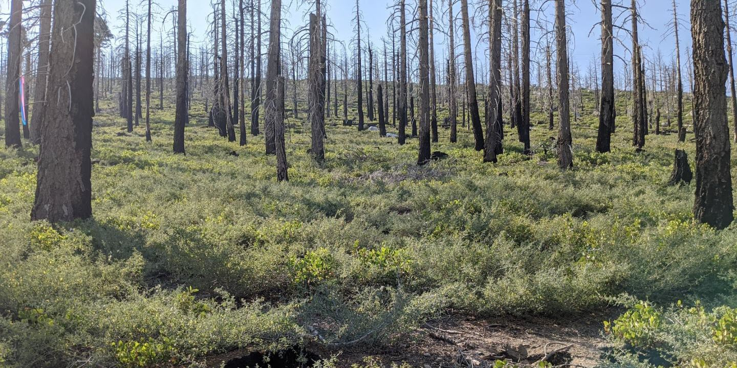 New Mapping Tool Identifies Where to Reforest after Wildfire