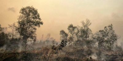 Fire-Resistant Tropical Forest on Brink of Disappearance