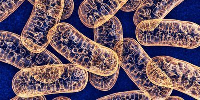 Cellular Exclusion of Mitochondria Protects Cells from Damage