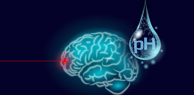 Eavesdropping on the pH Levels Inside the Brain