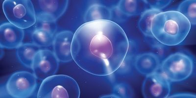 Single-Cell Analysis Finds Diverse Cell Populations in Metastatic Gastric Cancer