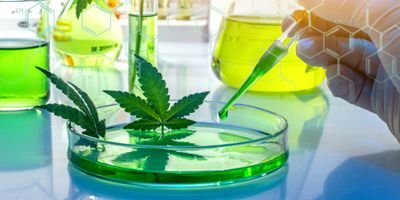 Precision Homogenization for the Cannabis Industry