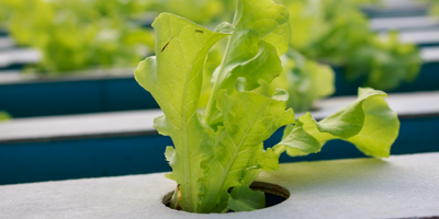 Research Aims to Help Astronauts Grow Veggies Better in Space
