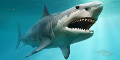 Megalodons Gave Birth to Large Newborns That Likely Grew by Eating Unhatched Eggs in Womb