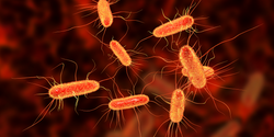 How These Bacteria Survive on Deadly Copper Surfaces