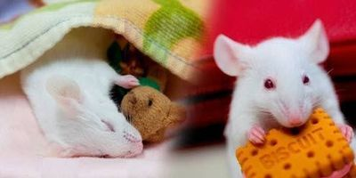 How the Brain Paralyzes You While You Sleep