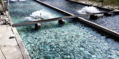 How Ion Beam Breeding Can Boost Aquaculture