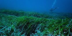 Marine Seagrass Can Catch and Remove Plastics from the Sea