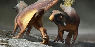 Scientists Reconstruct Dinosaur Orifice for the First Time