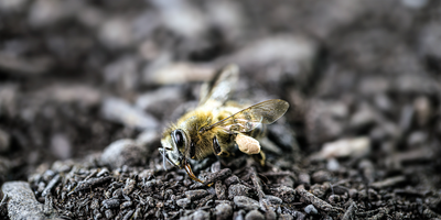 Pesticides Stop Bees and Flies from Getting Enough Sleep