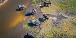 Using AI and Satellites to Count Elephants from Space
